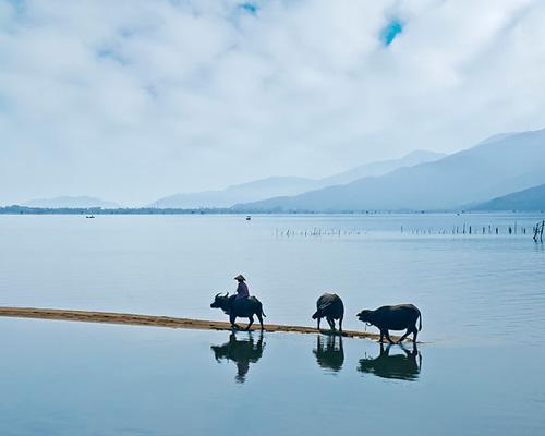 Hình ảnh đẹp về làng quê Việt Nam, con trâu cái cày