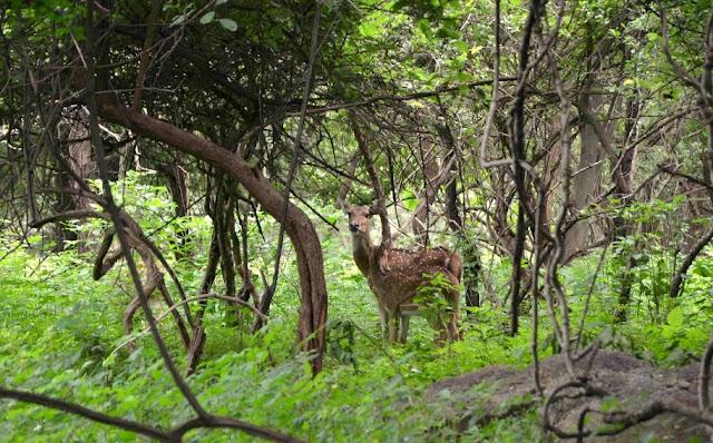 Balpakram-National-Park-Meghalaya
