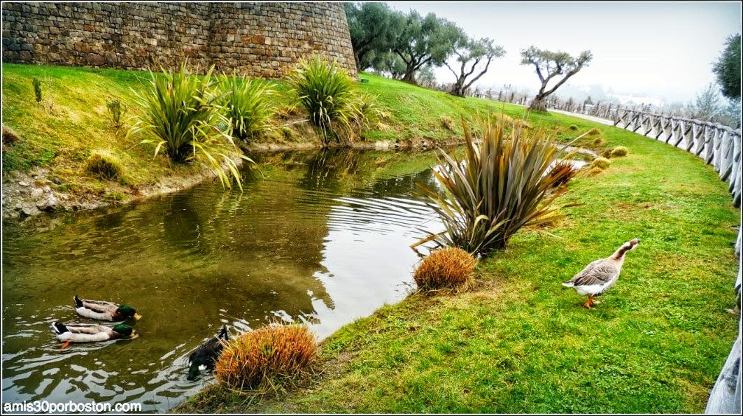 Ruta por las Bodegas del Valle de Napa: Foso del Castello di Amorosa