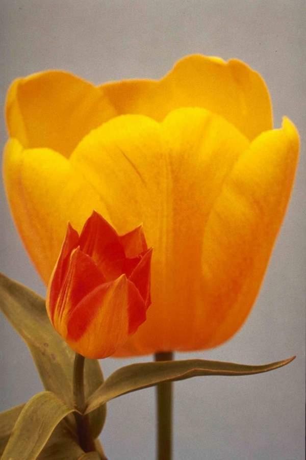 Gambar Flower