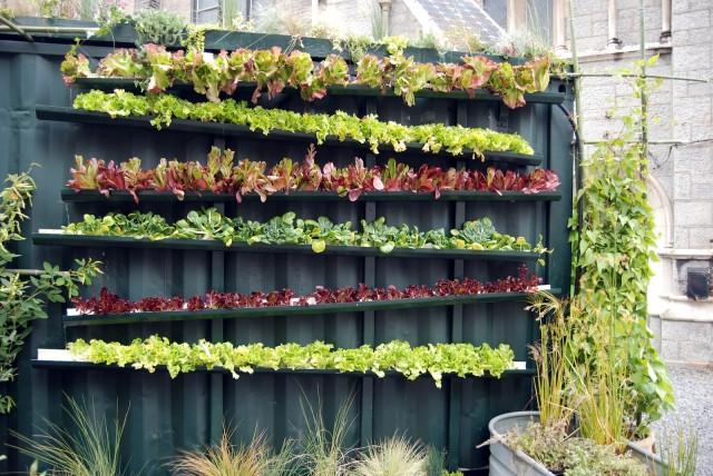 ปลูกผักในท่อ pvc ยาว
