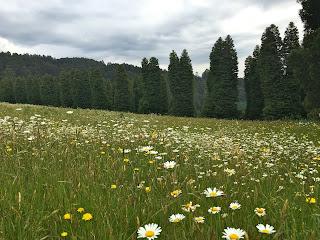 RJ Hamer Arboretum, Olinda, Dandenong Ranges