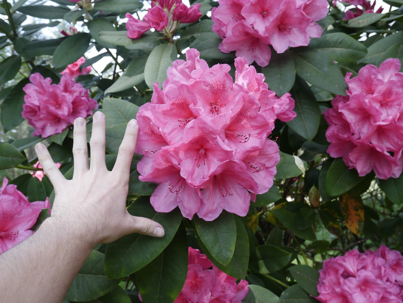 Garden Bloggers Bloom Day May 2016