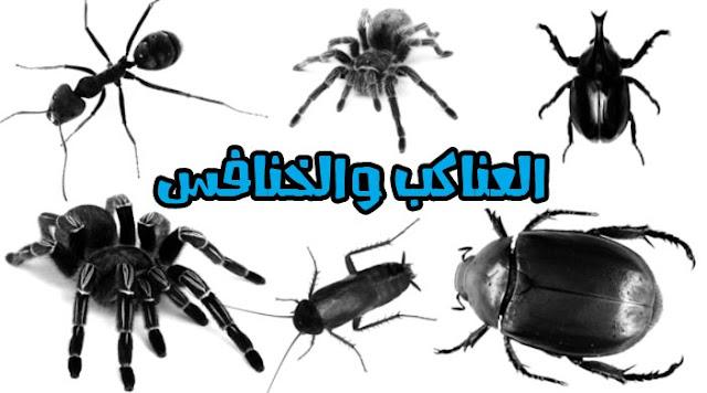 تحميل فرش فوتوشوب الحشرات