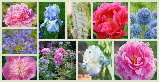 https://www.gardenia.net/garden/Peonies-and-Companion-Plants-Pink-Blue-Theme