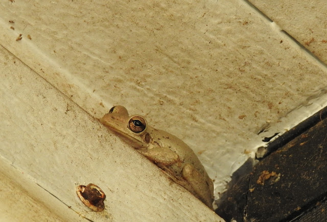 Tiny white frog looks so sad curled up there at the top of the wall.