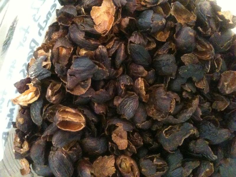 Conoce los tipos de sustratos para tu cultivo hidropnico  EcoSiglos