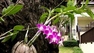 Ciri khusus tumbuhan anggrek