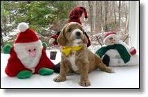 Picture of puppy in Santa hat