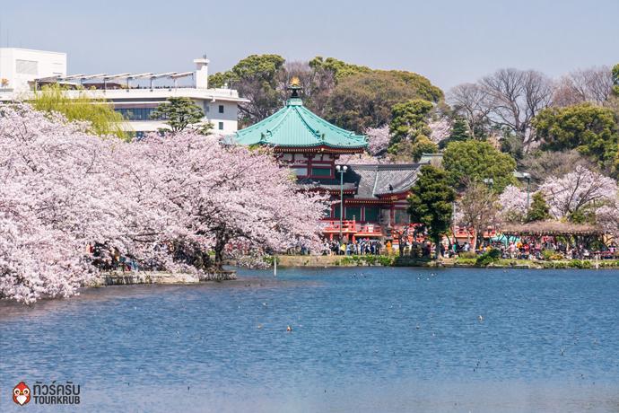 2. ทัวร์โตเกียว ชมซากุระที่สวนอุเอโนะ