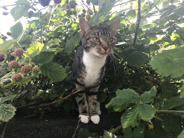 A tabby cat sitting on top of a shed surrounded by blackberry bushes