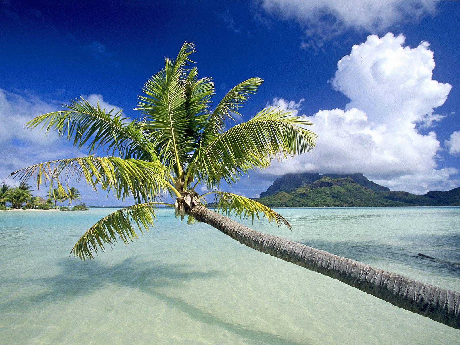 Beautiful Beach Wallpapers: World Visits: Tropical Island Beach Wallpaper Free Review