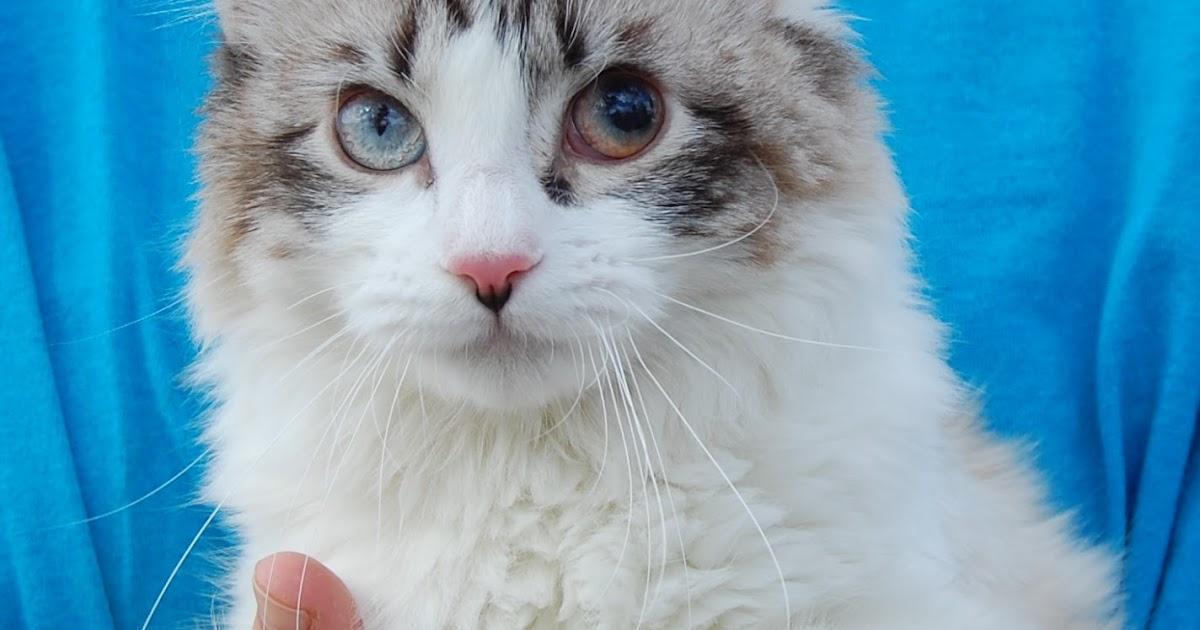 Dewey Cat Rescue