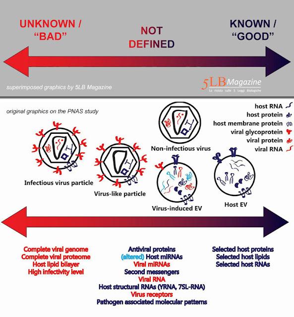 Virus e vescicole con le 5 Leggi Biologiche di Hamer