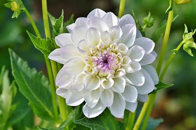 Tukang taman surabaya Bunga Bagus Untuk Taman