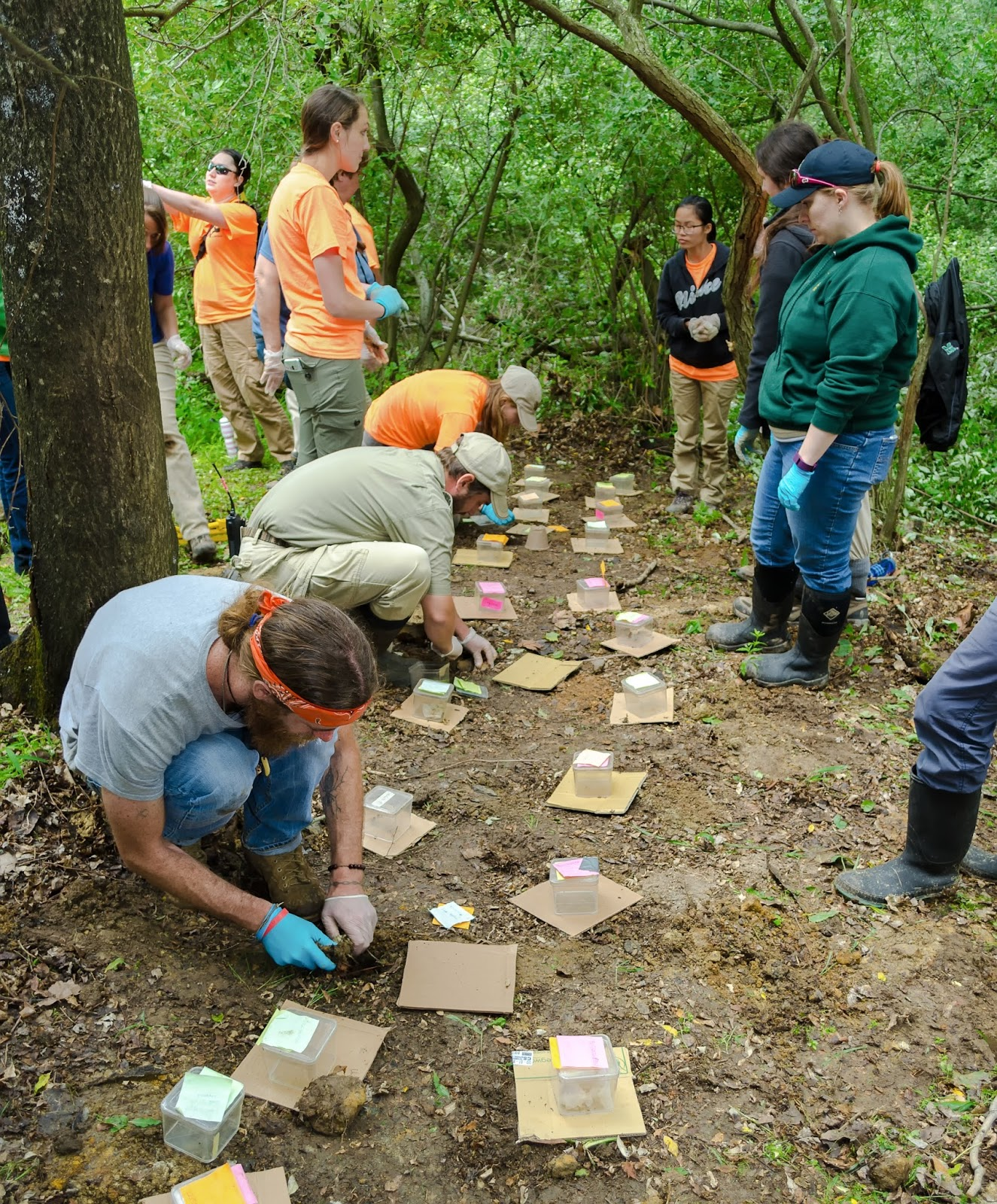 American Burying Beetle Conservation