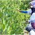 Pertamina Mendukung Mangrove Menjadi Muatan Lokal Sekolah di Indramayu