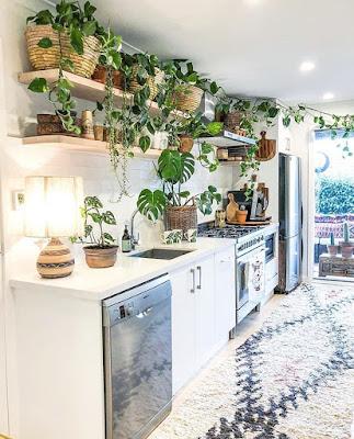 Zielone rośliny w mieszkaniu