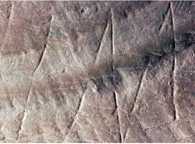 Félmillió éves ábrákat találtak kagylókon