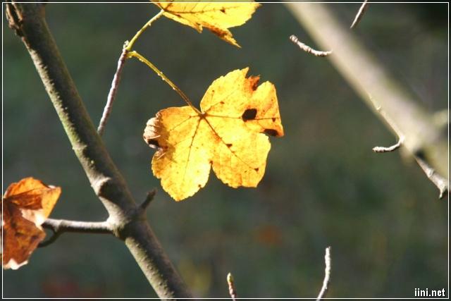 chiếc lá vàng tháng 10 cuối thu