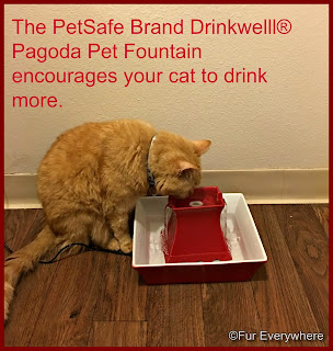 Carmine enjoys water from his new PetSafe Brand Drinkwell® Pagoda Pet Fountain.