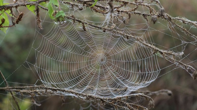 Warfare Prayers Against Cobweb Attacks - DreamsWithJoshua
