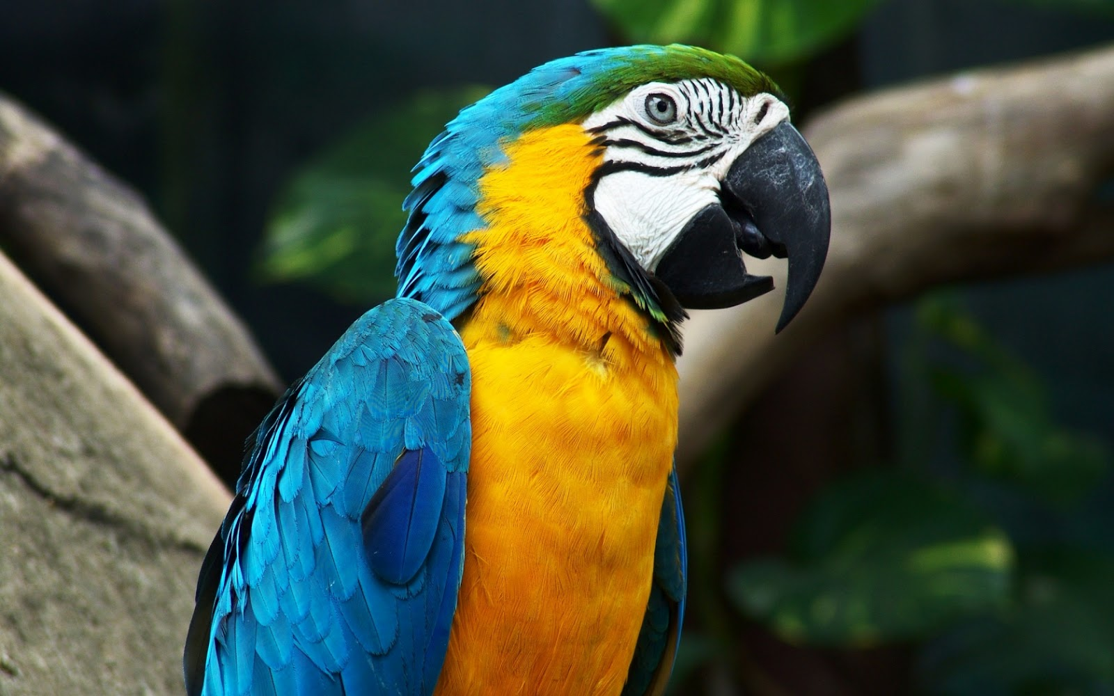 Top 47 most dashing and beautiful parrot wallpapers in hd adsss voltagebd Images