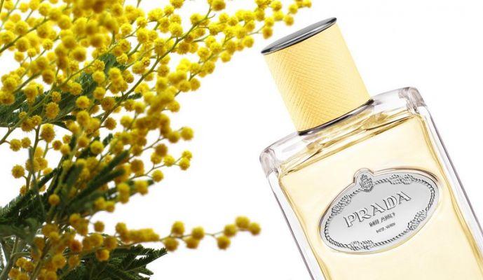 Infusion de mimosa prada купить fendi сумка женская замша