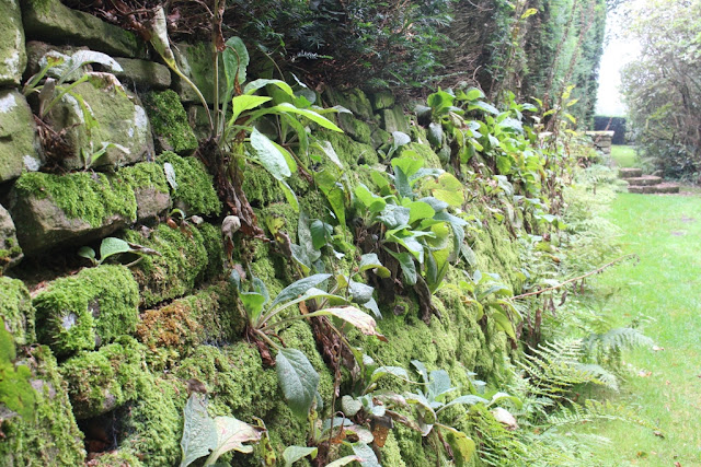 A beautiful wall colonised by nature