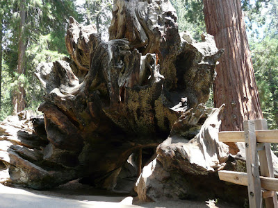 visite Sequoia National Park USA