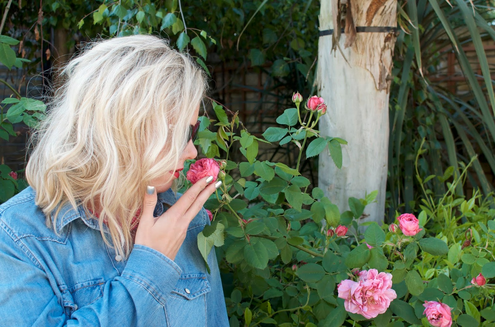 smelling pink roses