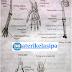 Pembahasan Tulang - Tulang Penyusun Rangka Manusia