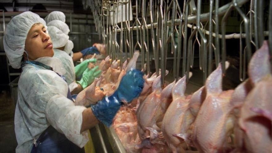 Fuerzan a avicultores en EEUU a usar pañales para no ir al baño