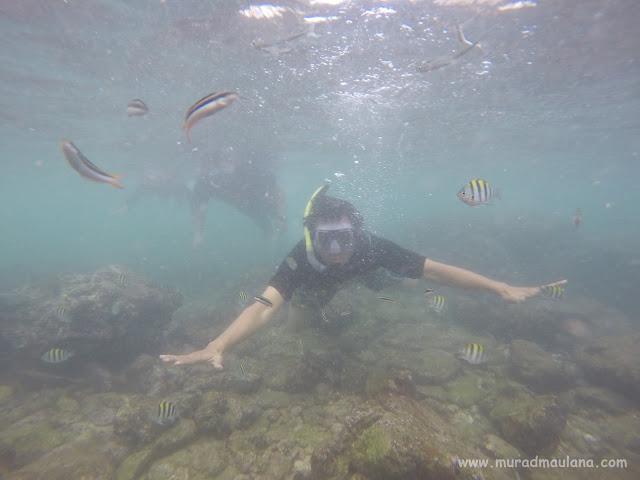 Saya Snorkeling di Pantai Nglambor 2