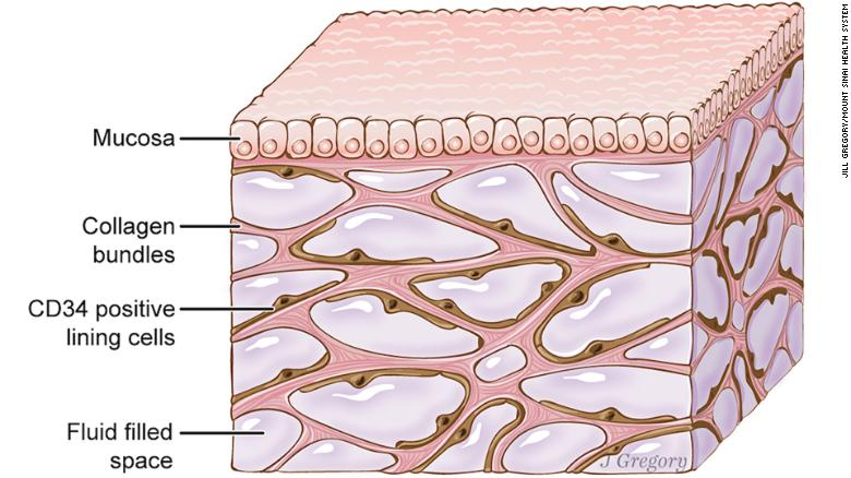 Interstitium layer