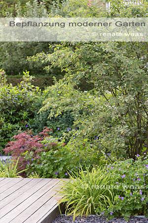 moderner Garten, Bepflanzung, Pflanzen, Ideen, einen modernen Garten planen, anlegen, bepflanzen