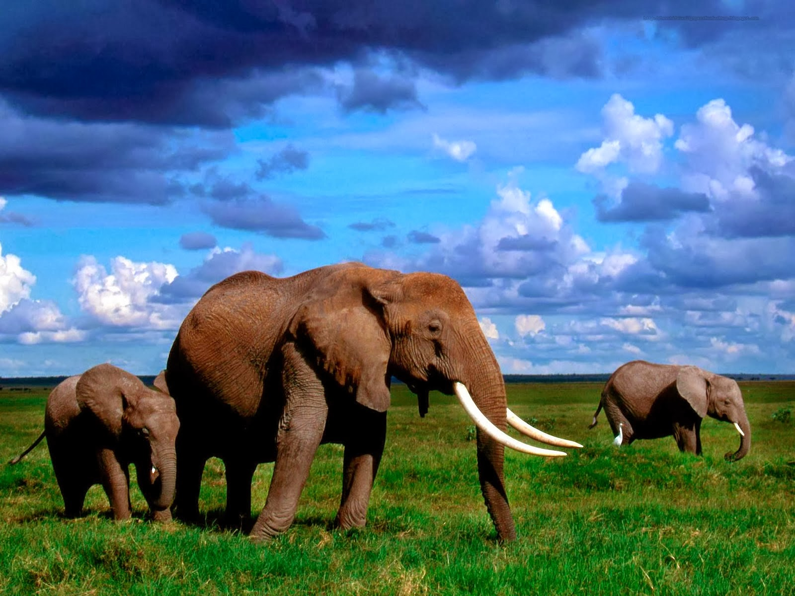Elephent wallpapers hd
