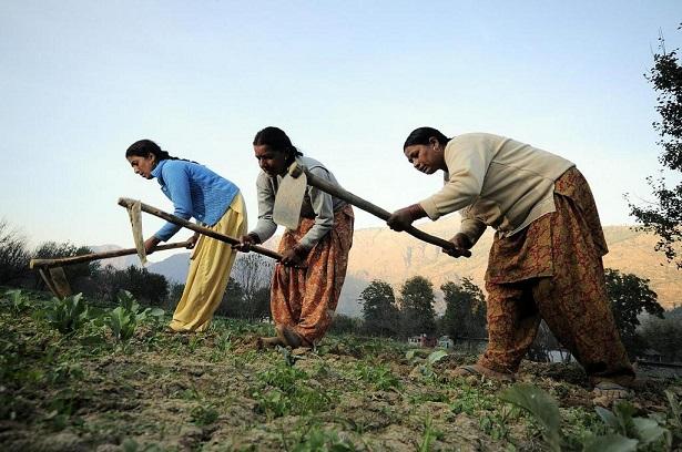 En Inde, les politiques doivent viser à renforcer les capacités des sols et non à promouvoir les produits agrochimiques