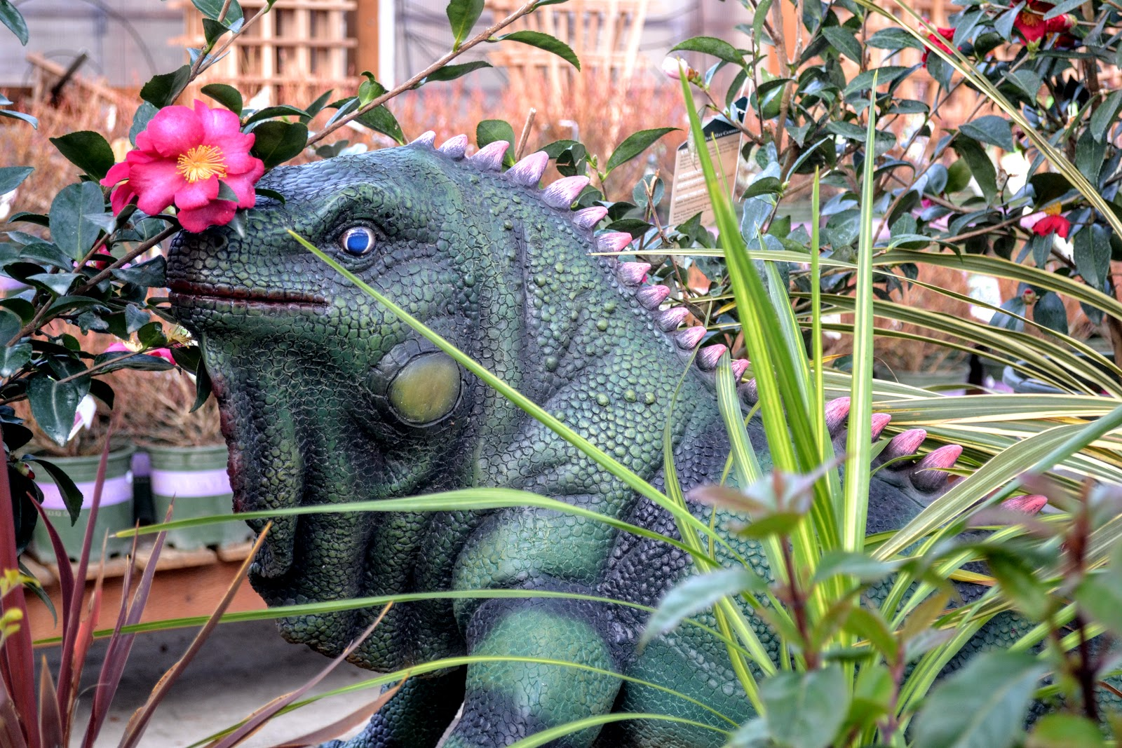 Critters Once Thought To Be Extinct Seem To Be Thriving At Bark And Garden  In Olympia.
