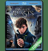 ANIMALES FANTÁSTICOS Y DÓNDE ENCONTRARLOS (2016) 1080P HD MKV ESPAÑOL LATINO