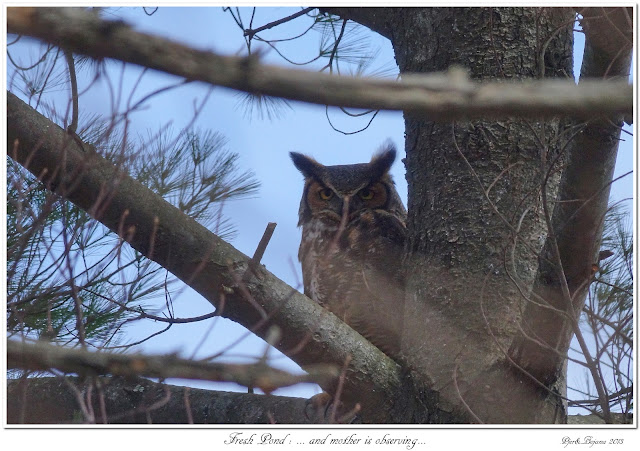 Fresh Pond: ... and mother is observing...
