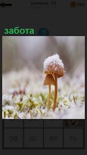 большой гриб заботится о маленьком, прикрывая его своей шляпкой сверху