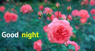 good night rose to her