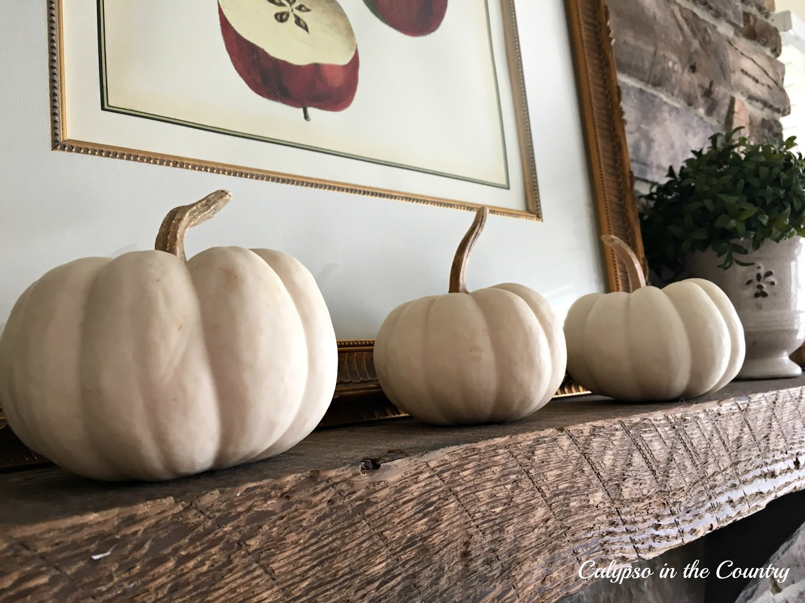 White pumpkins lined up on rustic mantel