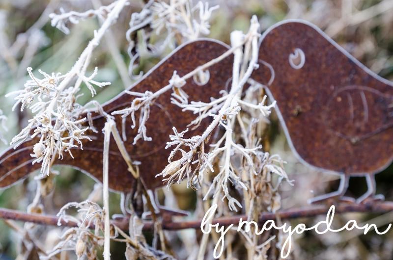 frost im garten und eine buchvorstellung mayodans home garden crafts. Black Bedroom Furniture Sets. Home Design Ideas