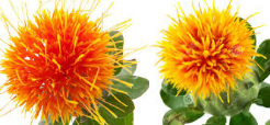Food Diet tips for healthy skin Safflower Oil for healthy glowing skin