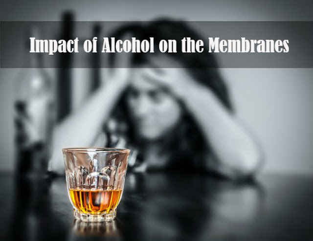 Impact of Alcohol on the Membranes