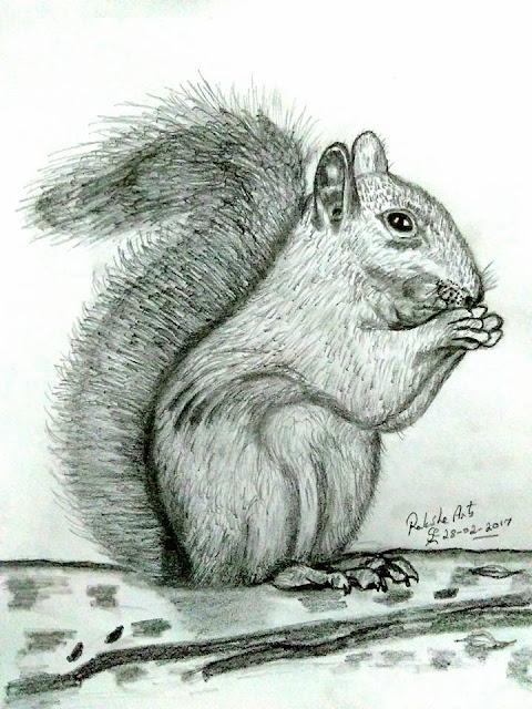 PENCIL DRAWING - SQUIRREL