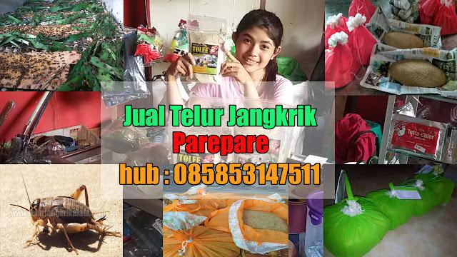 Jual Telur Jangkrik Kota Parepare Hubungi 085853147511-