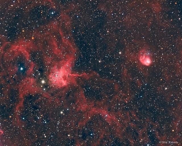 Nhện và ruồi trong vũ trụ. Hình ảnh: Joe Morris.